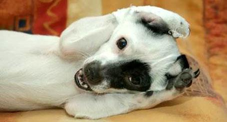 cagnolino-impaurito