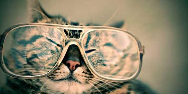 gatto-con-occhiali